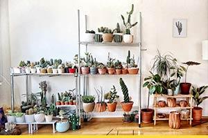 How to display your indoor plants