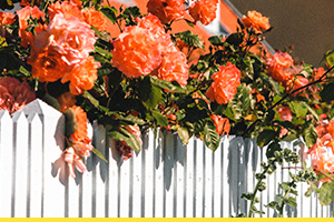 How to put up a garden wooden fence